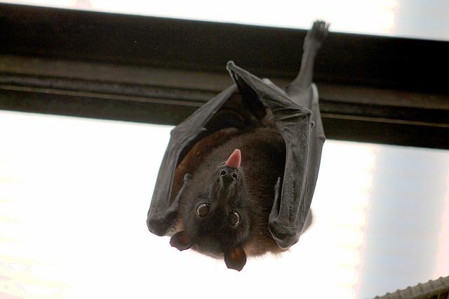 bat-1268650_640